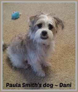 Dani - Paula's dog - protect your pet with pet coverage