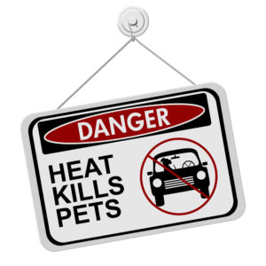 Protect your pets in the heat